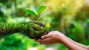 Eko biuro – 5 prostych sposobów jak być eko w biurze